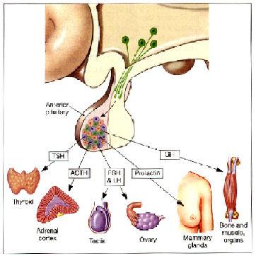 Lebensqualität, Kognition und Knochenstoffwechsel bei Patienten mit ...